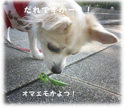 06_10_26_kurin4