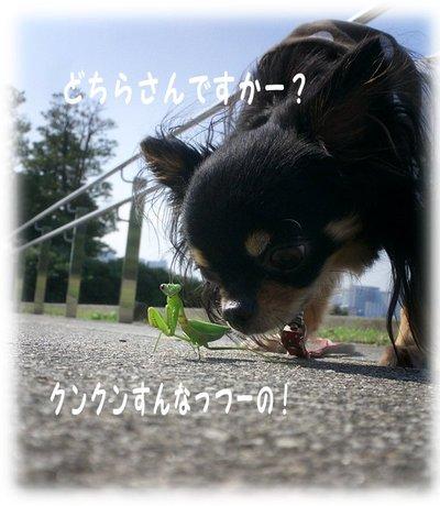 06_10_26_mimi4