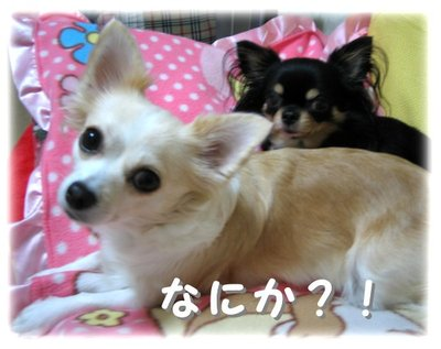06_11_11_kurimimi2
