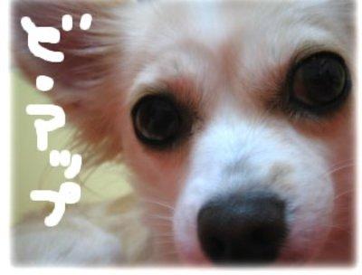 06_11_1_kurin2