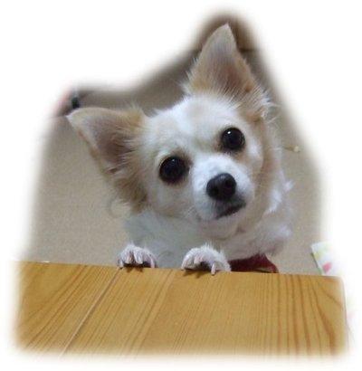 06_11_30_kurin1