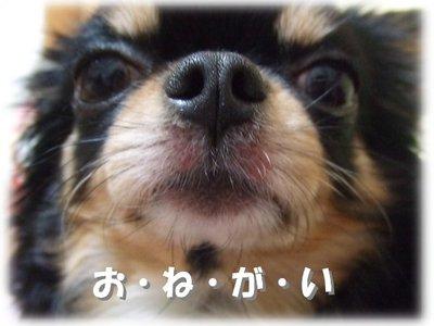 06_12_31_mimi1