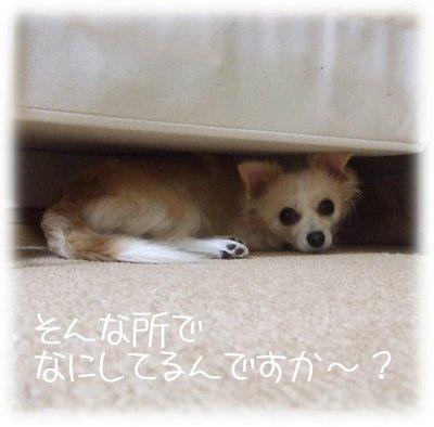 06_1_6_kurin2