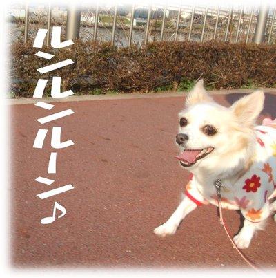 07_1_17_kurin2_1