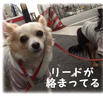 07_1_19_kurin2