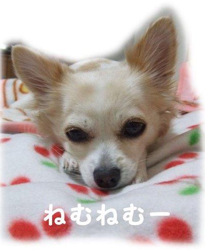 07_1_20_kurin2