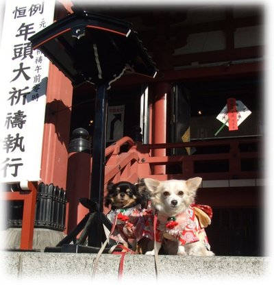 07_1_5_kurimimi1