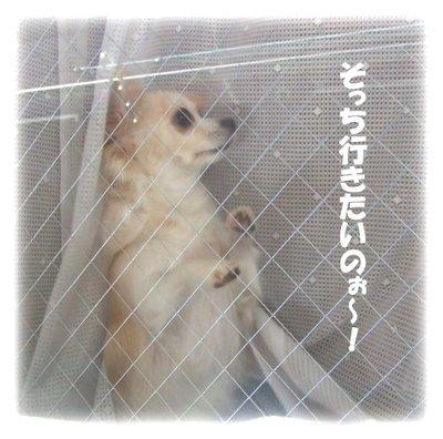 07_1_9_kurin3
