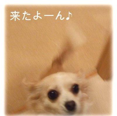 07_2_23_kurin2