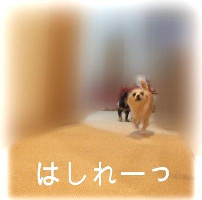 07_2_23_kurin4