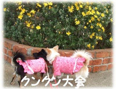 07_2_9_kurimimi19