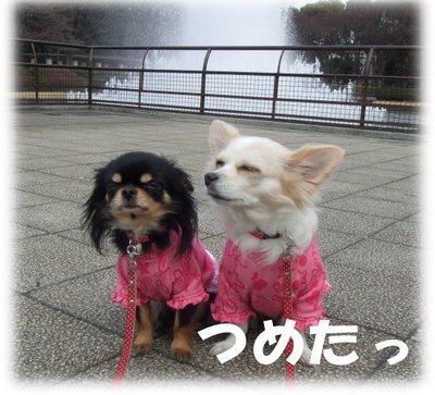 07_3_15_kurimimi5