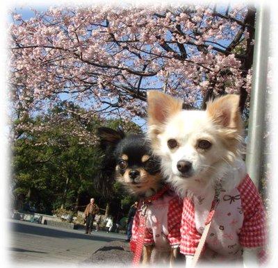 07_3_1_kurimimi5_1
