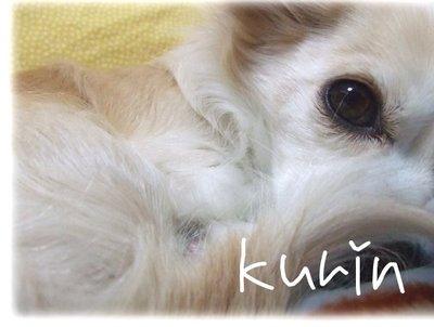 07_3_22_kurin3