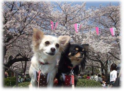 07_3_29_kurimimi4