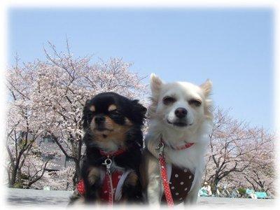07_3_29_kurimimi7