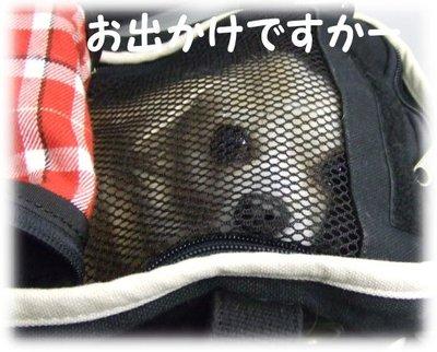 07_4_29_kurin1