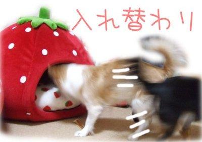 07_4_7_kurimimi4