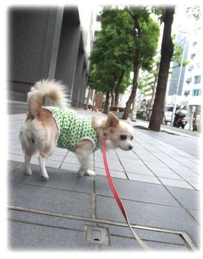 07_5_10_kurin2