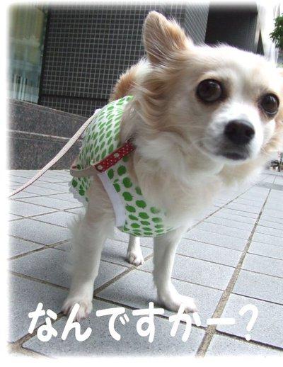 07_5_10_kurin5