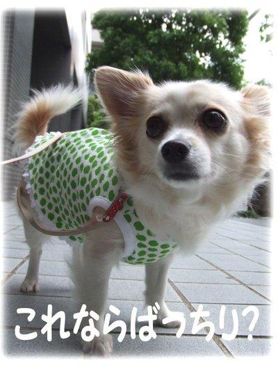 07_5_10_kurin6