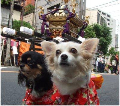 07_5_19_kurimimi2