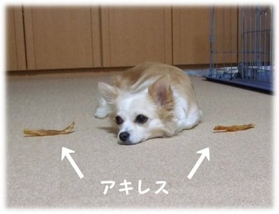 07_5_21_kurin1