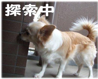 07_5_22_kurin1