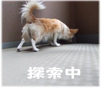 07_5_22_kurin2