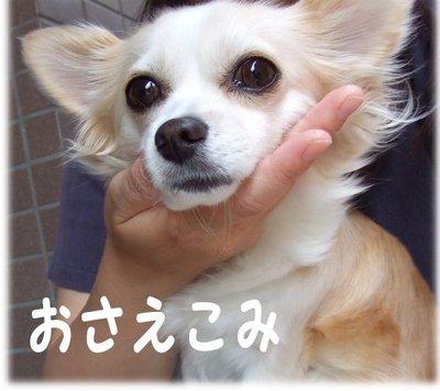 07_5_22_kurin3
