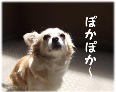 07_5_26_kurin1