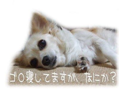 07_5_6_kurin5