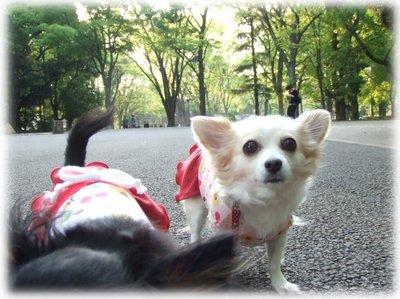 07_5_8_kurimimi3