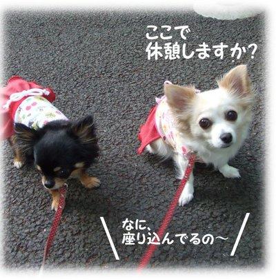 07_5_8_kurimimi5