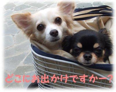 07_6_12_kurimimi1
