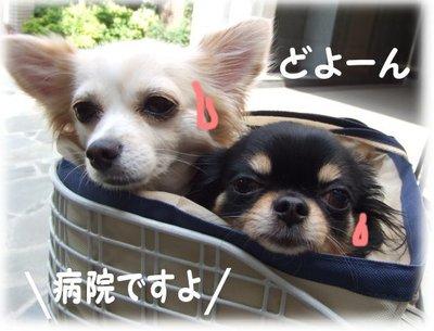 07_6_12_kurimimi2