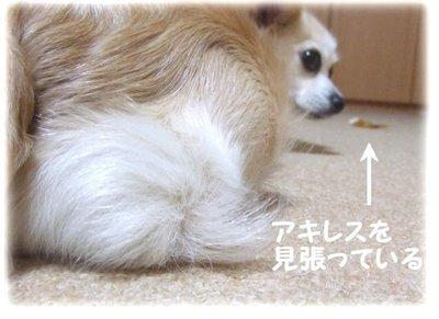 07_6_12_kurin3