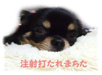07_6_12_mimi1