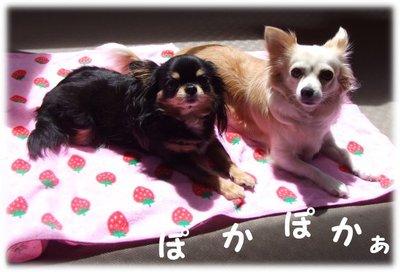 07_6_15_kurimimi1