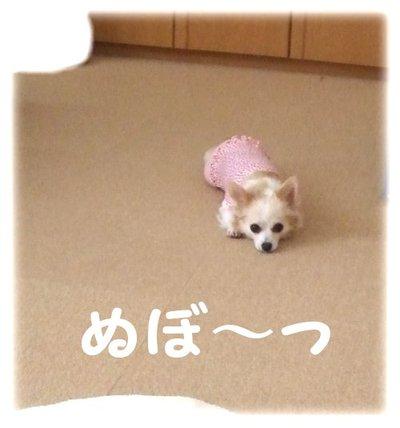 07_6_30_kurin1