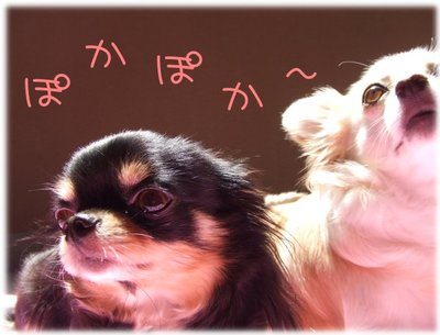 07_6_3_kurimimi2