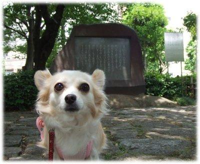 07_6_5_kurin2