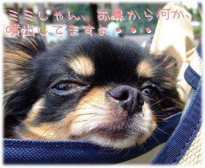 07_6_5_mimi6