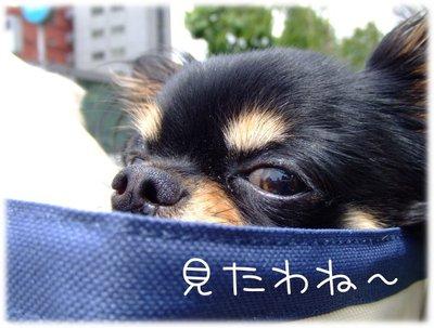 07_6_5_mimi7