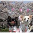 07_4_1_kurimimi31
