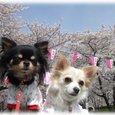 07_4_1_kurimimi32