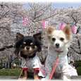 07_4_1_kurimimi33