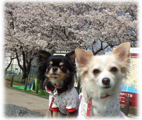 07_4_1_kurimimi12