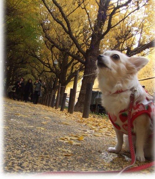 06_12_6_kurin1